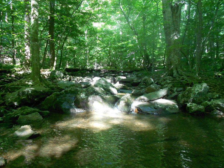 Creek crossing near the first AT shelter south of Rockfish Gap, looking upstream.