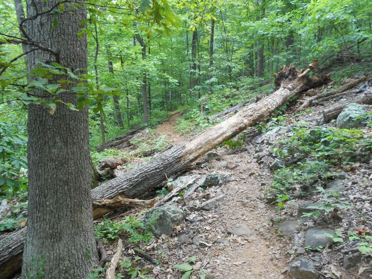 The trail near the top of Carter Mt., just under the orchard.