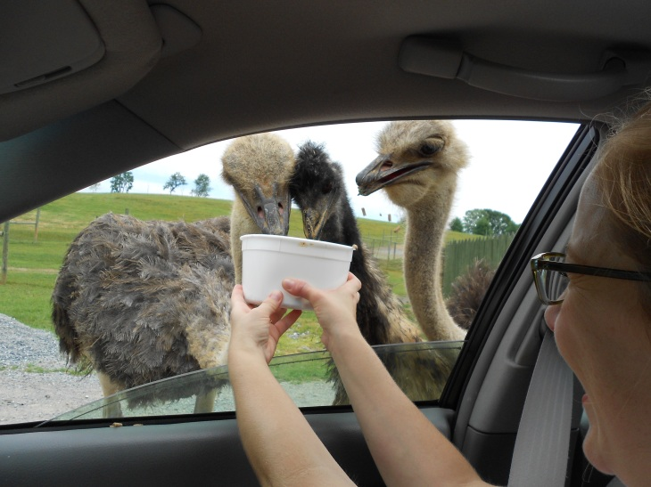 With ostrich.
