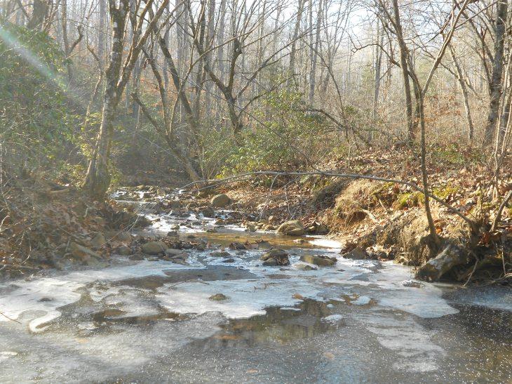 Pilgrim at Walnut Creek.