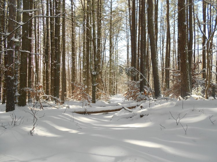 Untrodden trail.