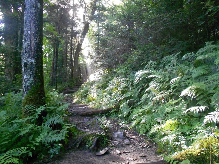 Appalachian Trail heading south from Newfound Gap to Clingmans Dome